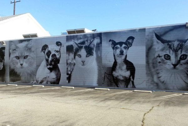 NKLA Wall Graphics - Los angeles